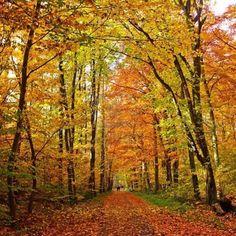 Autumn Park, Frankfurt