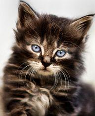 """""""A kitten is mischief in mink."""" --Christine Harris"""