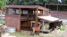 Image from http://www.offthegridnews.com/wp-content/uploads/2012/07/goats1-300x169.jpg.