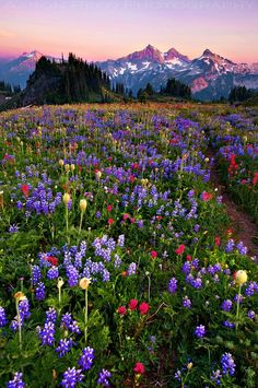 Beautiful mountain valley.  Nothing more Beautiful that a Valley of Wildflowers in between two mountains!!