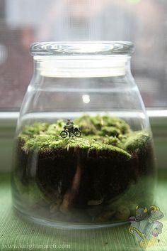 Idea: make a small mtb park terrarium