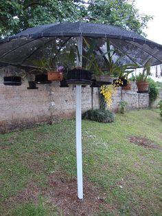 Com os serviços de TV a cabo, as antenas parabólicas ficaram de enfeite no teto das casas e prédios. Uma amiga da Fan Page do Facebook, po...