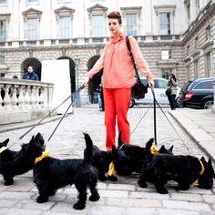 scottish terrier fashion - Recherche Google