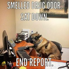 "K-9..Well, hell, here is  exactly the right  ""person"" to end the dictatorship  of  bureaucracy, and the scourge of drugs all at the same time !"
