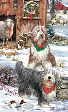 Bearded Collie - Christmas Guardians -  by Margaret Sweeney