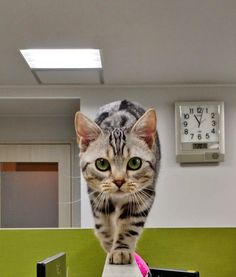 Funny Cute Cats, Cute Dogs, Pretty Cats, Beautiful Cats, I Love Cats, Crazy Cats, National Cat Day, Lots Of Cats, Here Kitty Kitty