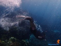 free diving at Moalboal Underwater, Diving, Whale, Shots, Free, Animals, Whales, Animales, Scuba Diving