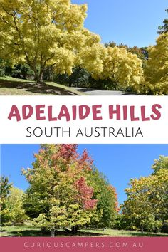 There are things to do in the Adelaide Hills that will appeal to all types of travellers. The scenery, wildlife, and family friendly activities are the perfect mix of fun and relaxation. Although only 20 minutes from Adelaide, the Adelaide Hills might as well be another world away. #australia #travel #autumn #curiouscampers South Australia, Australia Travel, Clare Valley, Stuff To Do, Things To Do, Kangaroo Island, Wildlife Park, Adventure Activities, Amazing Destinations
