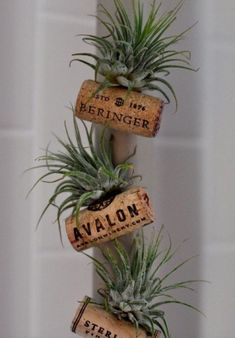 Ingenious wine cork planters for your little plants - Garden Wine Craft, Wine Cork Crafts, Wine Bottle Crafts, Air Plant Display, Plant Decor, Wine Cork Projects, Diy Projects, Garden Projects, Wine Bottle Corks