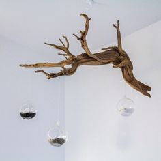 Driftwood with Three Glass Globes