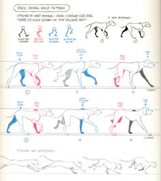 Walk cycles for dogs and cats from Richard Williams' seminal book, The Animator's Survival Kit, 2001.