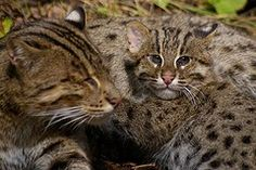 by Smithsonian's National Zoo Find out About Genuine Cat Treatment If you are just one of the lots of folks lucky enough to own a pet cat or numerous pet cats as animals, then you require to require time and also make the effort to find out correct pet cat treatment. Among my biggest...  - #About #Care #Learn #Real #Cats