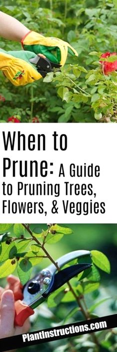 We've compiled a pruning guide which will tell you exactly when to prune and why! Of course every plant is different, so this is just a general guide that will apply to most plants! #GardeningTips