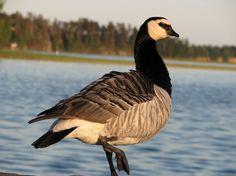 Posing Bird