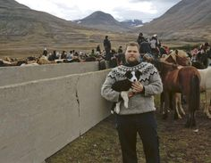 Davíð Logi Jónsson, with his border collie puppy in the sorting pen at Laufskálarétt in northern Iceland on September 24th, 2011. (Photo by ...