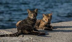 Street Cats Istanbul
