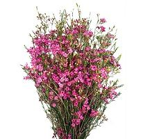 See local store for pricing, colors, and other details. Sams Club Flowers, Wax Flowers, Wedding Inspiration, Wedding Ideas, Stems, Floral Arrangements, Greenery, Bouquet, Sam's Club