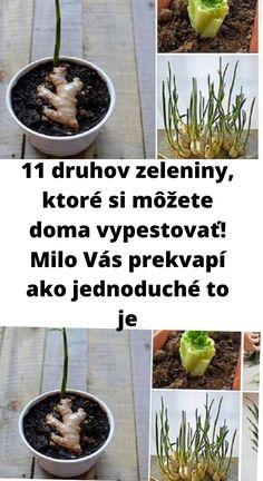V dnešnom článku nájdete priamo jedenásť tipov na zeleninu, ktorá Vám krásne pôjde vypestovať aj v domácich podmienkach. Plants, Flora, Plant, Planting