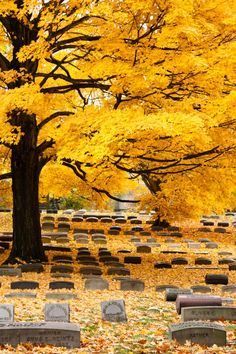 Fall at Lakeview Cemetery beautiful amazing