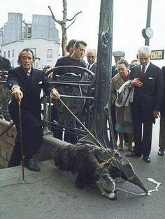 Salvador Dalí con sus mascotas. Paris 1969