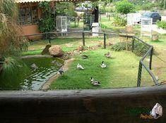 Duck Pens, Duck Breeds, Backyard Ducks, Chicken Barn, Garden Pond Design, Duck Farming, Duck House, Future Farms, Mini Farm