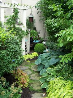 A small space side yard garden with hostas and heuchera. The AC unit hides beneath the trellis.