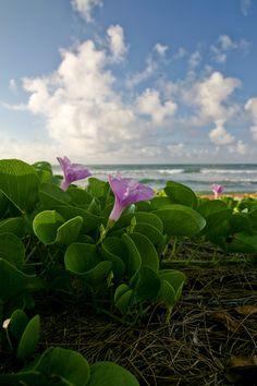 Flowers on the Beach #Hawaii