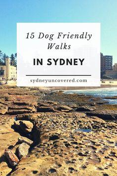 Federal Parks, 15 Dogs, Rock Pools, Beautiful Park, Picnic Area, Beach Walk, Australia Travel, Dog Friends