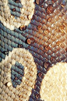 I like this snake skin because of the colours contrasting together. There is a lot of pattern and texture on this snake skin and the white really stands out. The white circle is focal point.