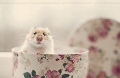 Hamsters in Teacups!