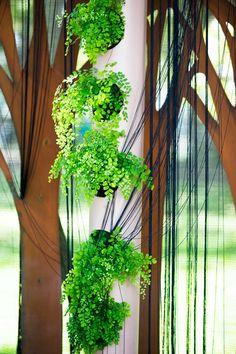 maidenhair fern adiantum raddianum plants i love pinterest plantes foug res et plante. Black Bedroom Furniture Sets. Home Design Ideas