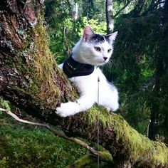 #adventurecats put a lot of us to shame when it comes to exploring!