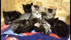 Fundraising for shelter expansion and proper enclosures to reduce infection in the kitty shelter.