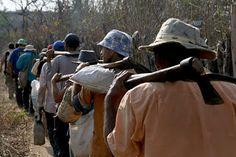 Pregopontocom Tudo: Com 40 milhões de escravos no mundo, OIT pede mais empenho dos países