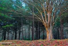 Autumn, Rasht, Guilan, Iran.