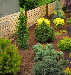 A good grouping of dwarf conifers are drought tolerant and look good year' round.  Lots of opportunities with color and texture!