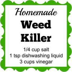Homemade Weed Killer This Homemade Weed Killer has only 3 ingredients. Spray it on the weeds and they'll die within a few days.This Homemade Weed Killer has only 3 ingredients. Spray it on the weeds and they'll die within a few days. Diy Gardening, Container Gardening, Organic Gardening, Gardening Quotes, Apartment Gardening, Gardening Books, Vegetable Gardening, Garden Weeds, Lawn And Garden