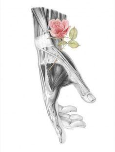 Human Anatomy Art, Hand Anatomy, Anatomy Drawing, Girl Anatomy, Art Inspo, Medical Drawings, Medical Art, Flower Anatomy, Artistic Anatomy