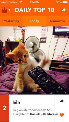 Change the channel. #kittens #kitty #cat #technology @Klooff
