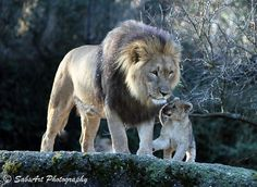 Photo Little Lion Boy and his father by Sabrina Kammer on 500px