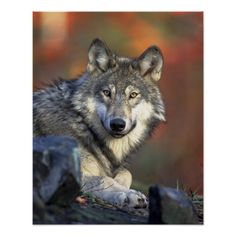 Find over 100+ of the best free national geographic images. National Geographic Posters