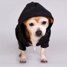 Flex Fleece Dog Hoody Black -got to get this for our Luna!