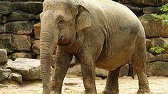 Moeder olifant en pasgeboren jong overleden. Droef bericht uit een van de mooiste dierentuinen van de wereld.