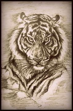 Tiger's drawing by BinhMinh Lai