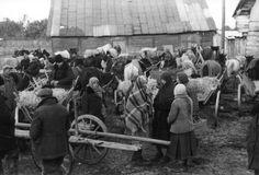 Poland, איכרים מקומיים, ספטמבר 1939. איכרים פולנים מקומיים