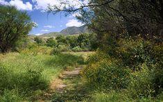 Patagonia-Sonoita-Nature Conservancy - great birding-under an hour away