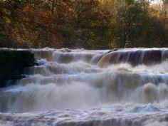 Aysgarth Falls, Yorkshire by Virginia Sharpe