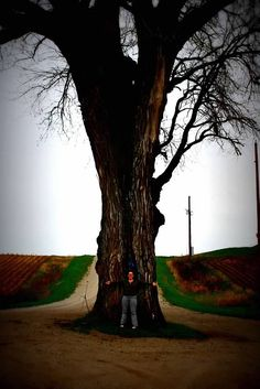 """Iowa's  """"Tree in the Road."""" Find this and other trip ideas on Travel Iowa's Blog."""