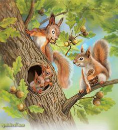 Eichhörnchen - Familie