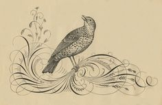 The original scanned version of this amazing Pen Flourished Branch with an engraved Bird, is seen just above. At the top of the page is the cleaned up . Best Period Dramas, Masterpiece Theater, Tinta China, Robin Bird, Reclaimed Furniture, Graphics Fairy, Vintage Fonts, Calligraphy Art, Card Tags
